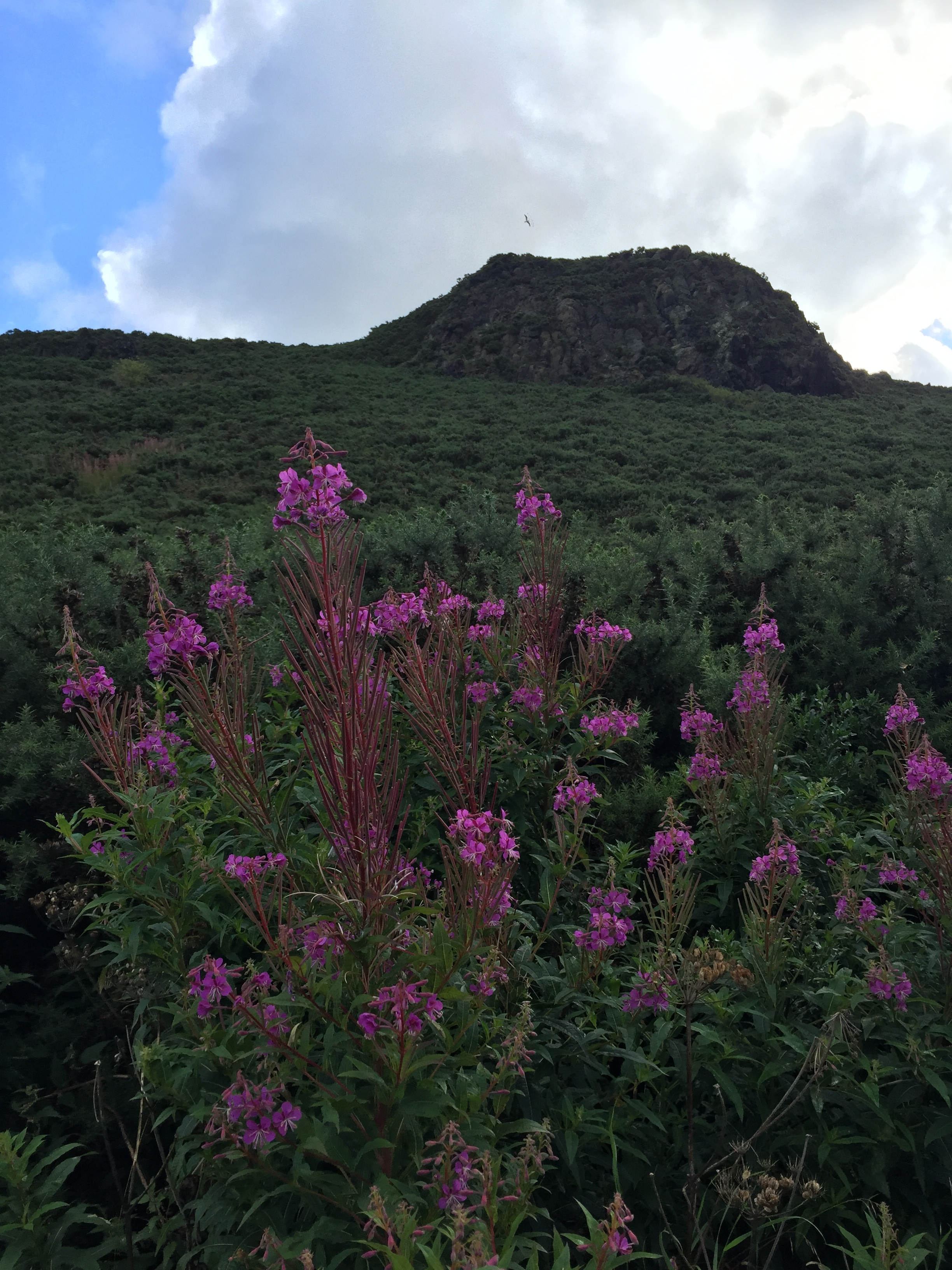 Wildflowers at the foot of Arthur's Seat.