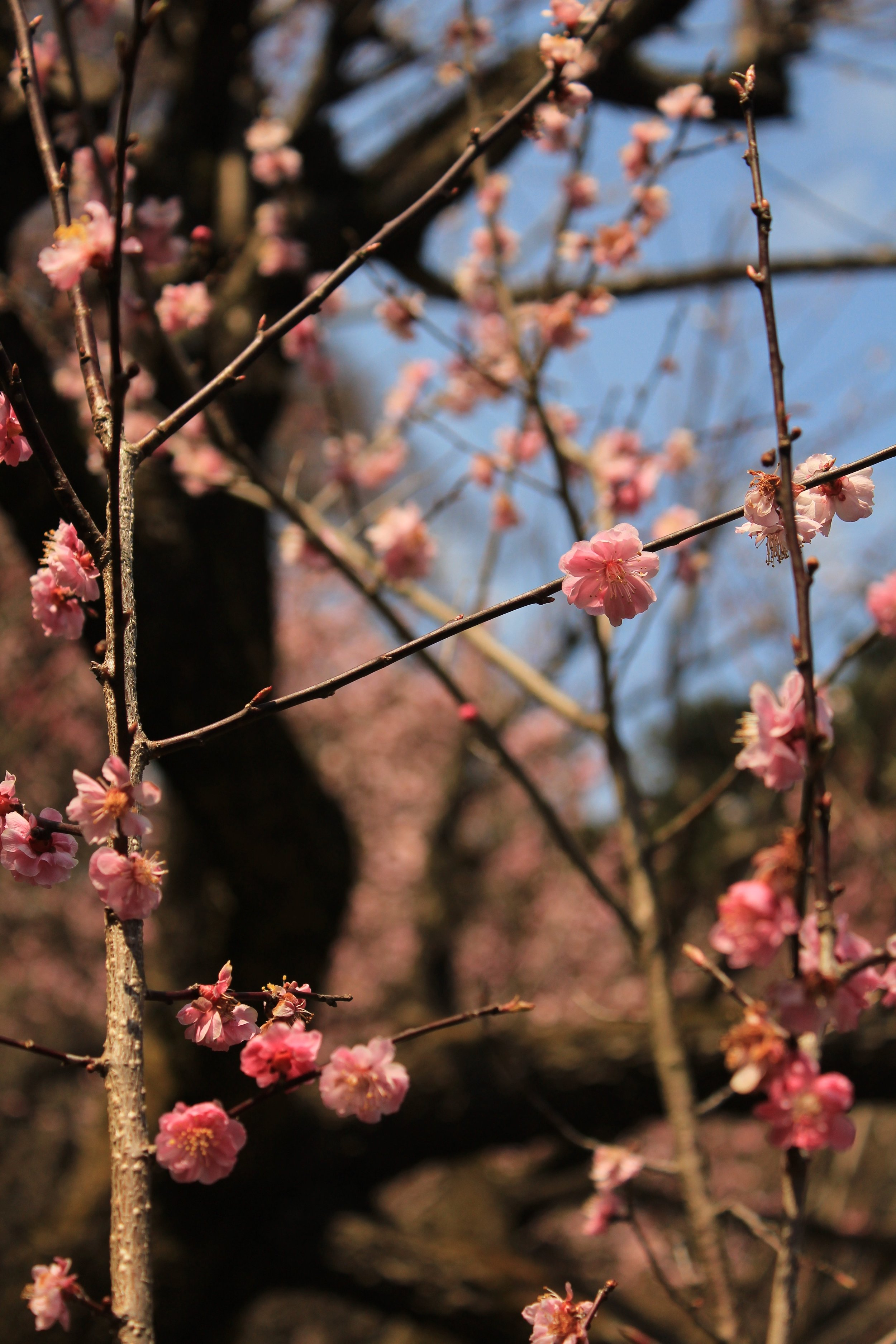Japan_Kyoto-1.jpg