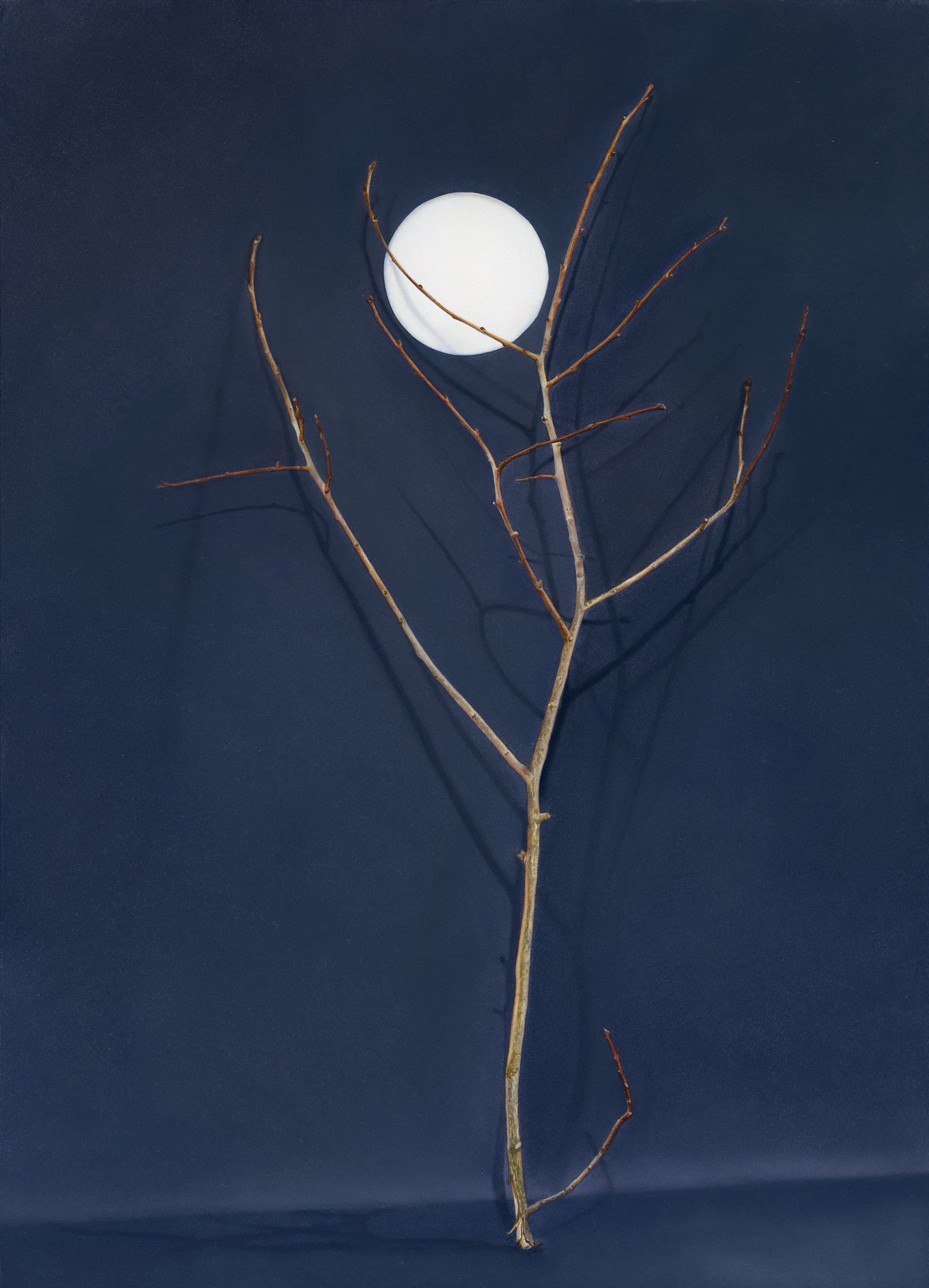 Tree with Cut-Out Moon (2016), Claire Kerr,Oil on panel, 25.2 x 18.1cm.