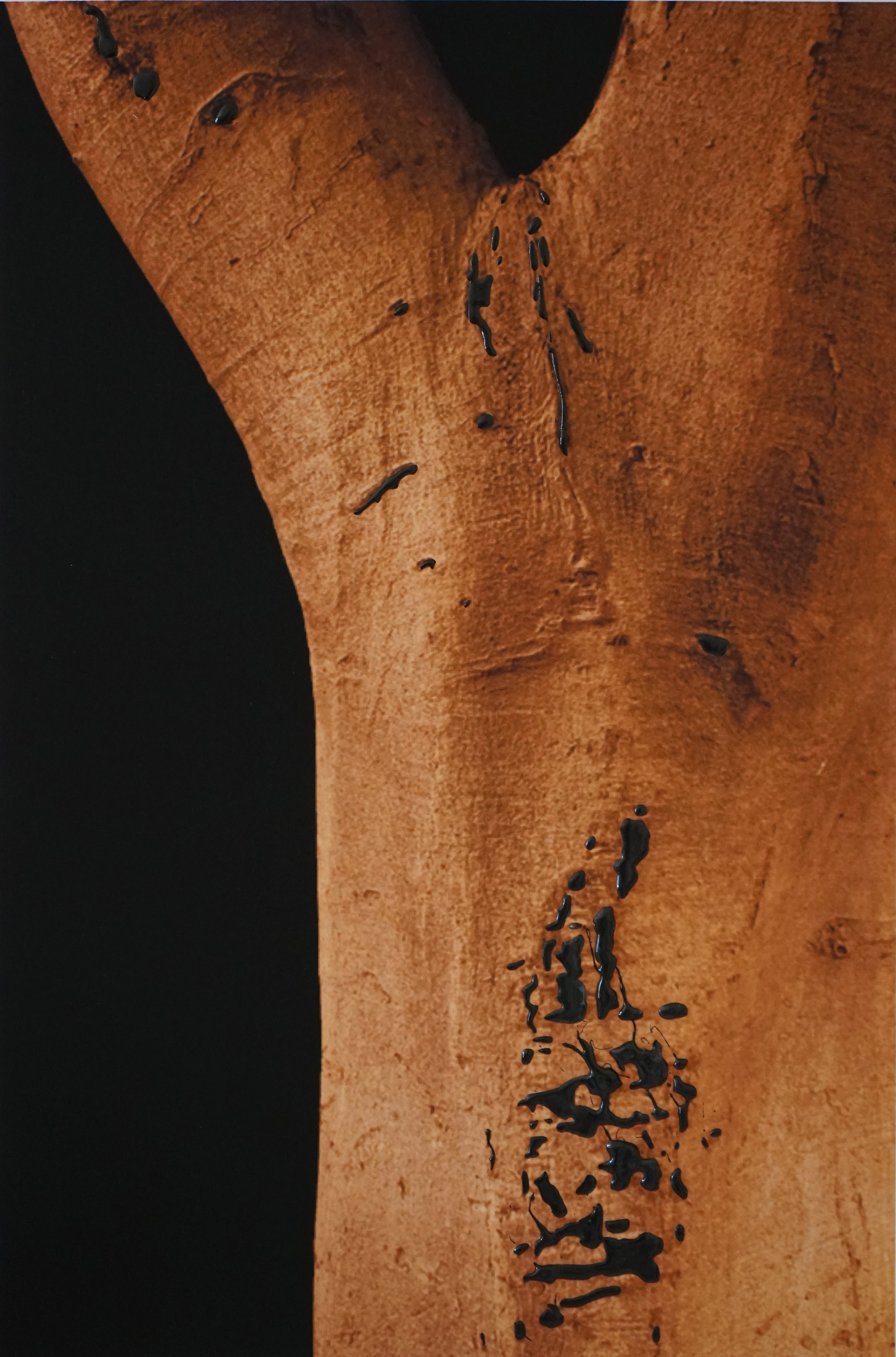 Ficus Macrophylia_Bark_2016_DSC06060.jpg