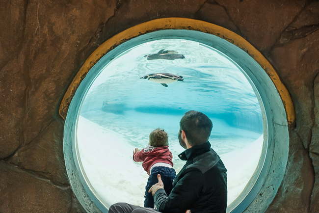 Father and son watching penguins london zoo.jpg