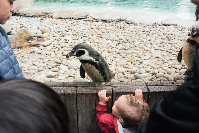London-zoo-penguins.jpg