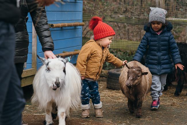 London-zoo-petting-farm.jpg
