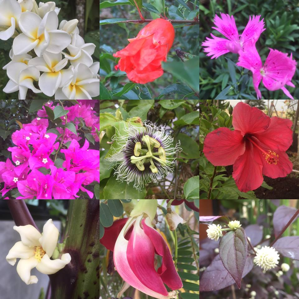 These are some of the flowers blooming in our garden just now