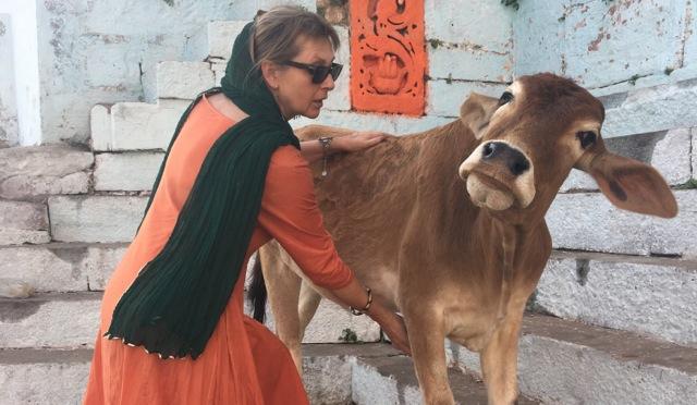 """TTouch """"Lecken-der- Kuhzunge""""bei einer Strassenkuh ...(Varanasi, Indien )"""