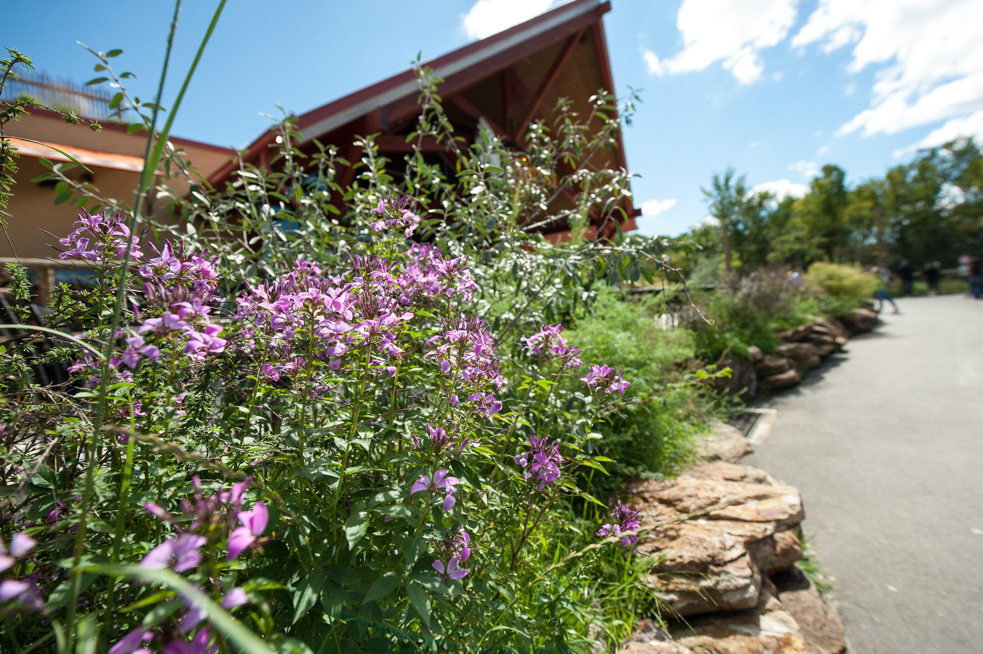 Iron Garden Walk Photo by Rick Darke.jpg