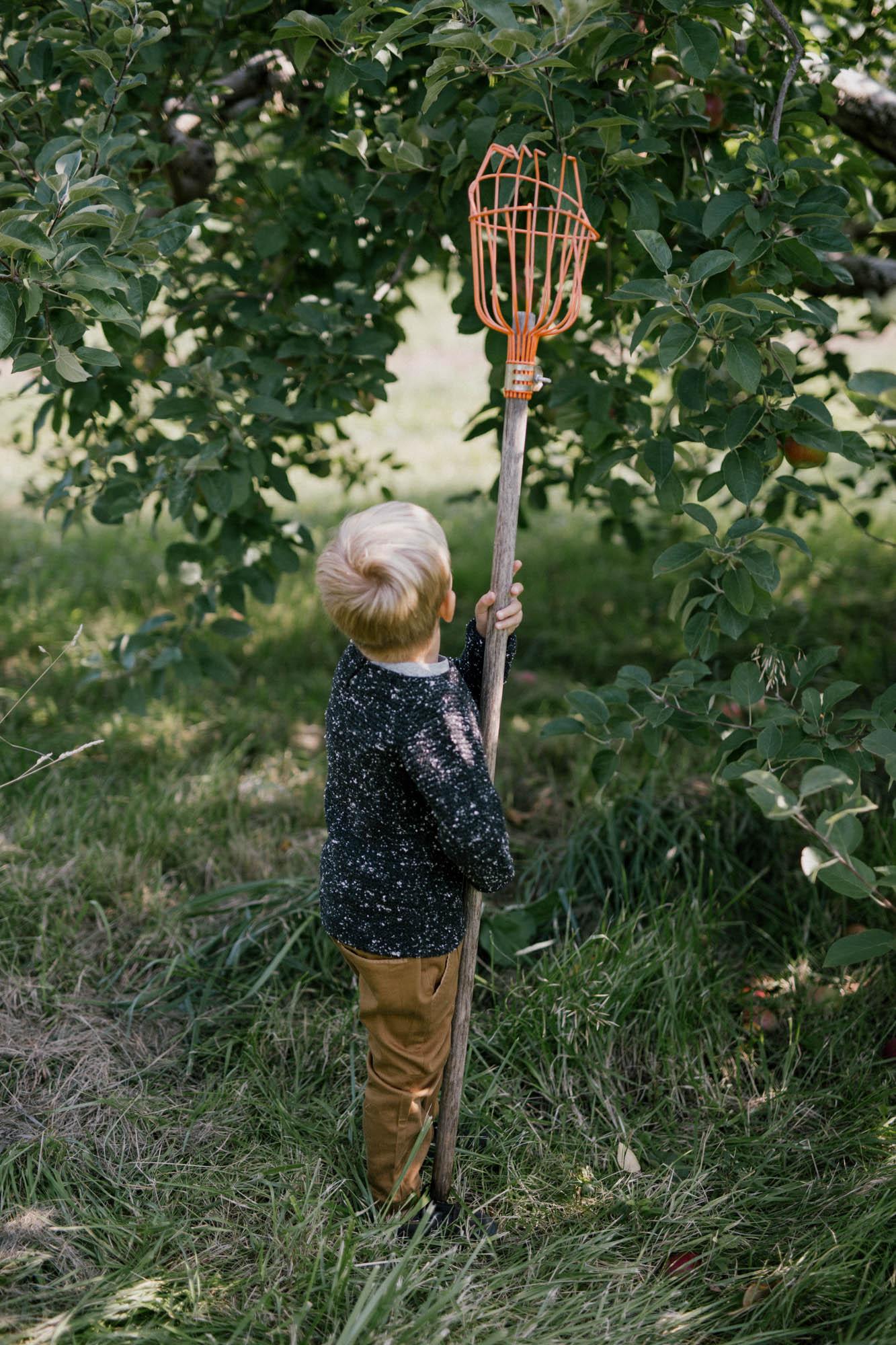 orchard_LC-6.jpg