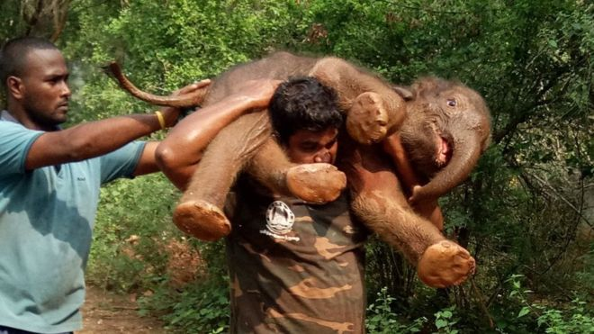 Baby Elephant Carry.jpg
