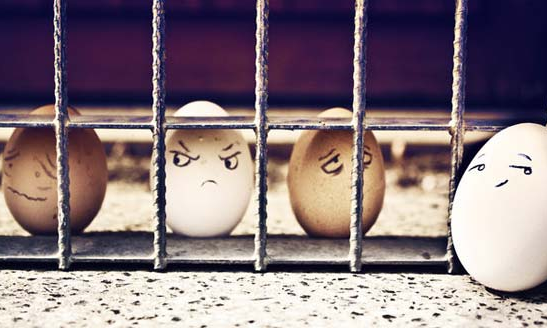 Funny Eggs.PNG
