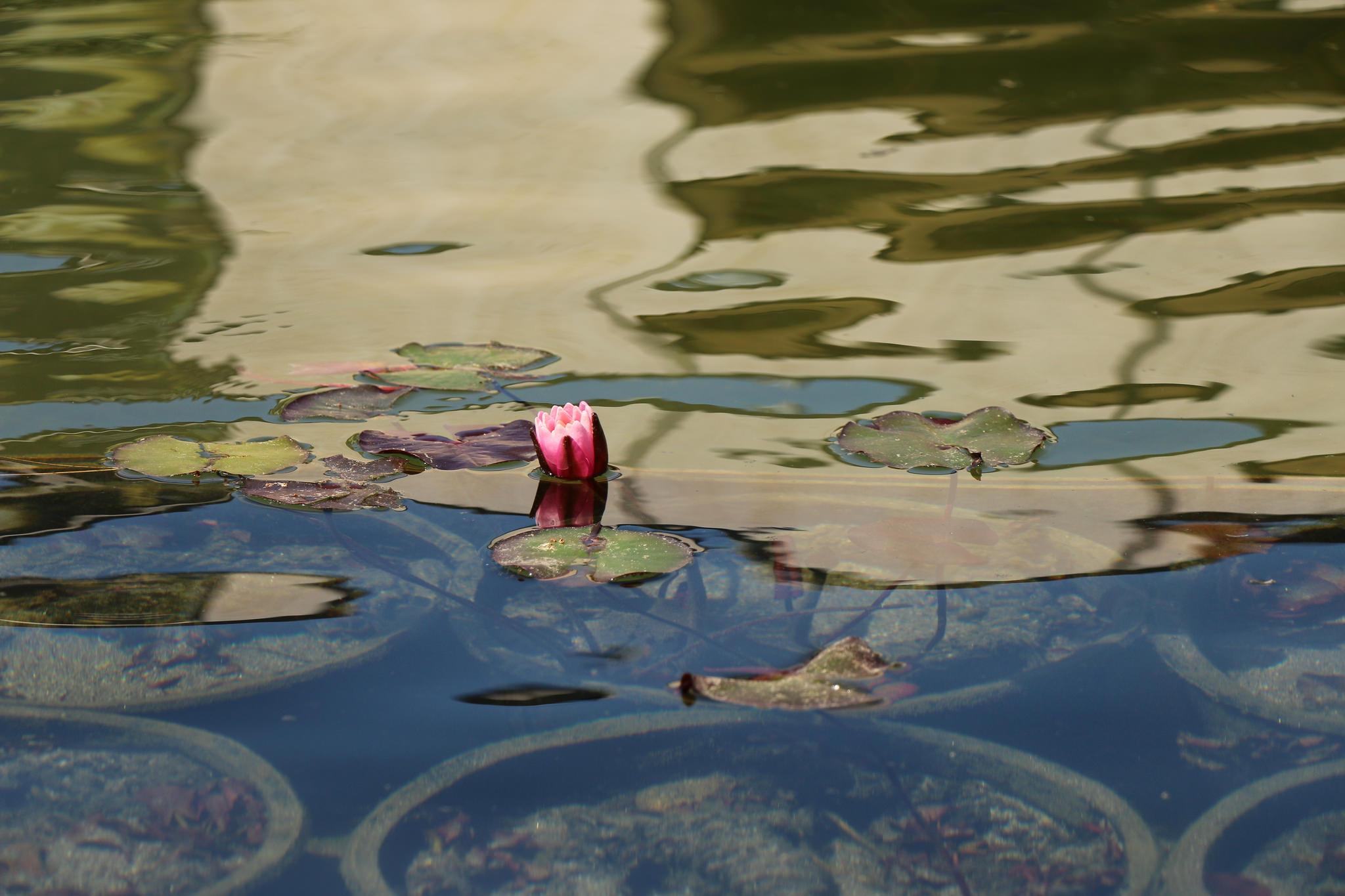 Blooming Balboa Park_18540152616_l.jpg