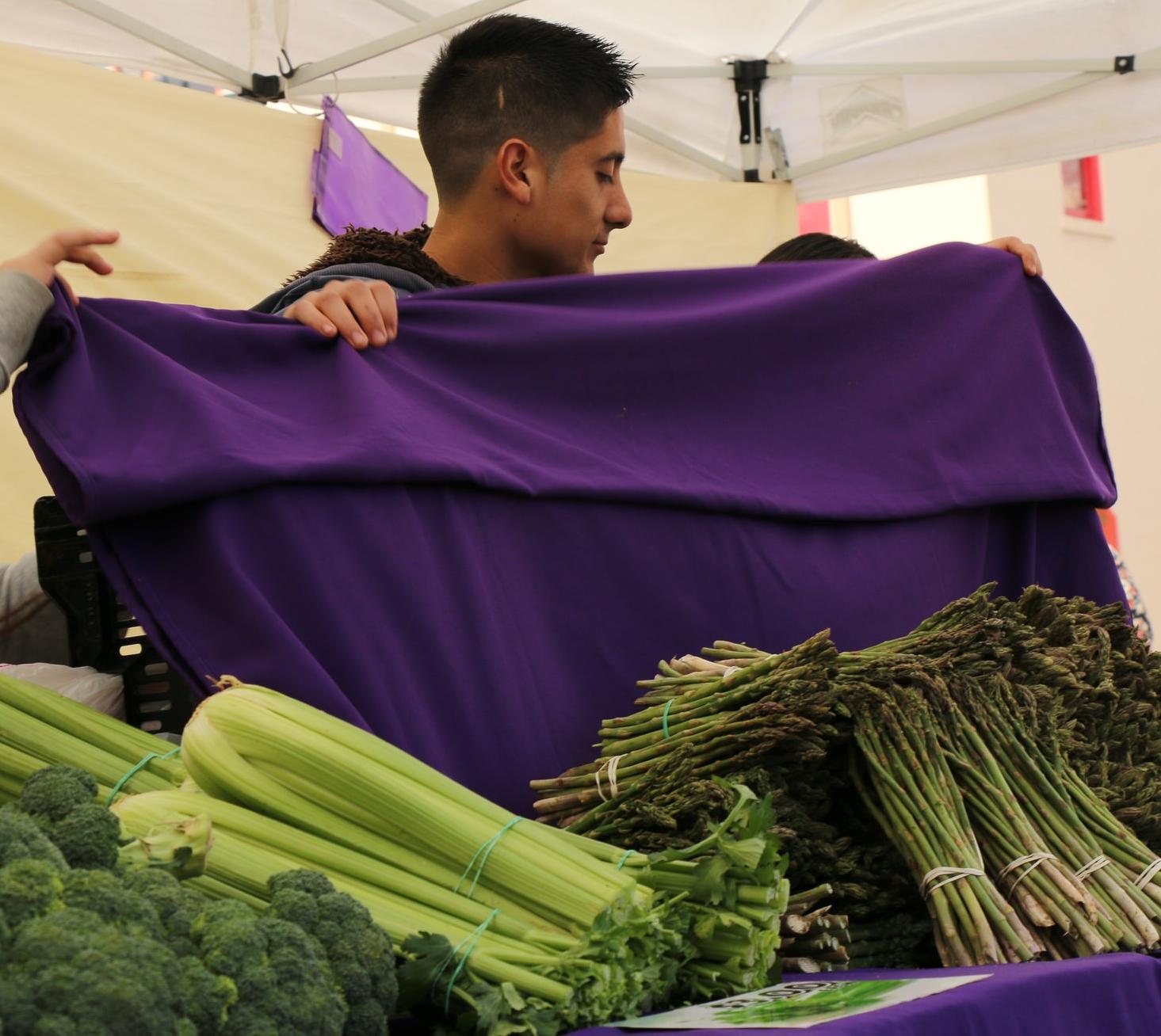 Green Slash Purple_18378868778_l.jpg