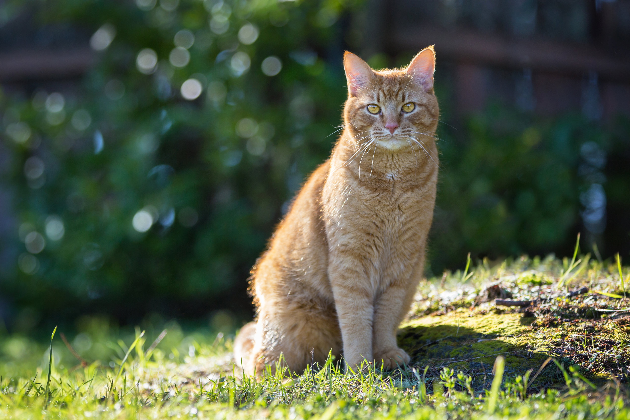 - Got an outside Kitty? I've got a long lens.Kitty won't even know what hit him!