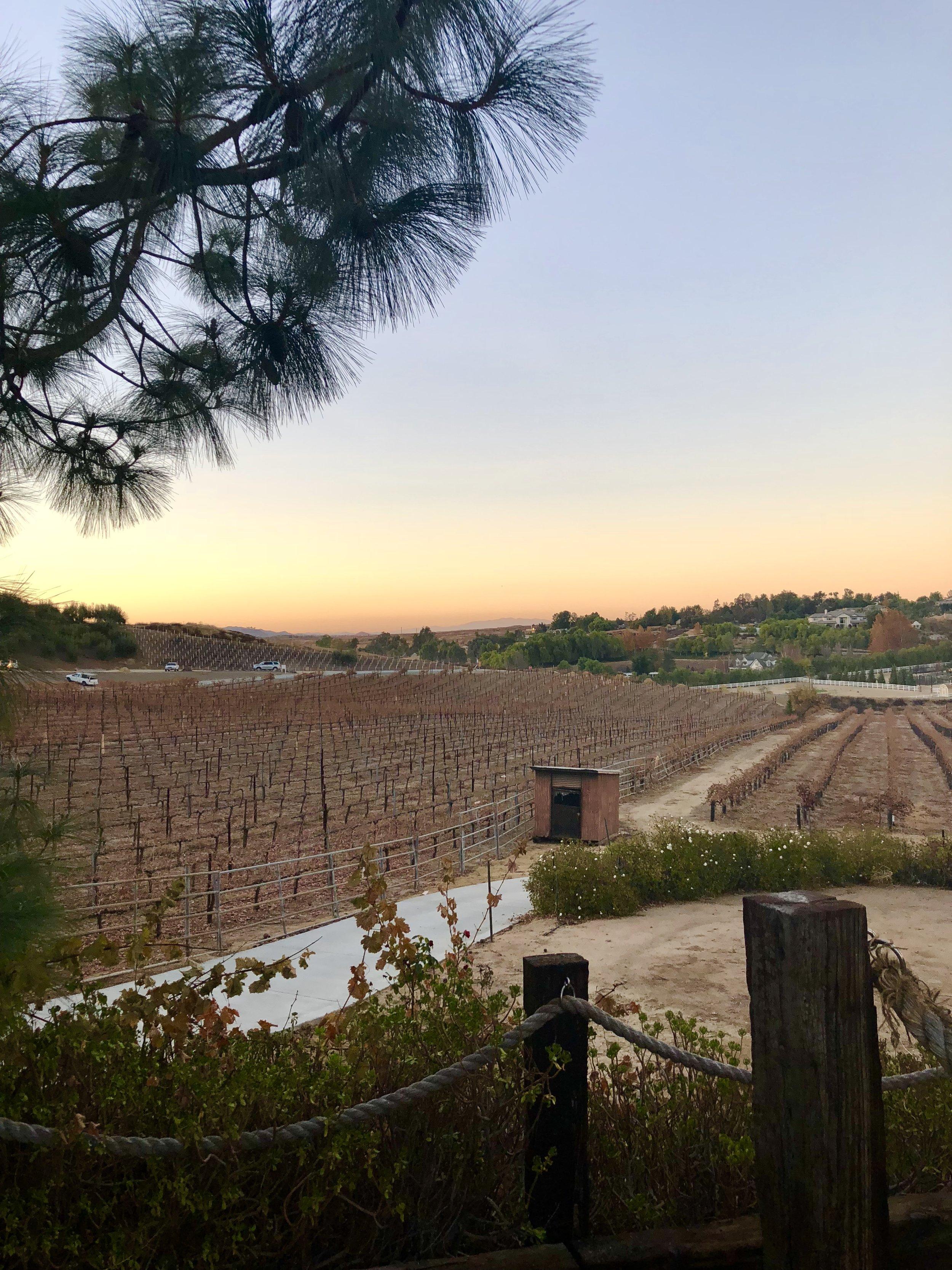 Lumiere Vineyards