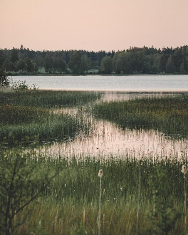 Summer magic🦟😉✨ - - - - - - - - #instaphoto #photooftheday #instapic #naturephotography #naturelover #evening #sweden #loves_sweden #instanature #ig_sunrisesunset #moodygrams #earthmood #morningmagic #natureshooters #summermagic #summerevening #sunset #natureloversgallery #natureseekers #naturehealing #folkgreen #folkscenery #folksouls #artofvisuals #light #magic #agameoftones #lake