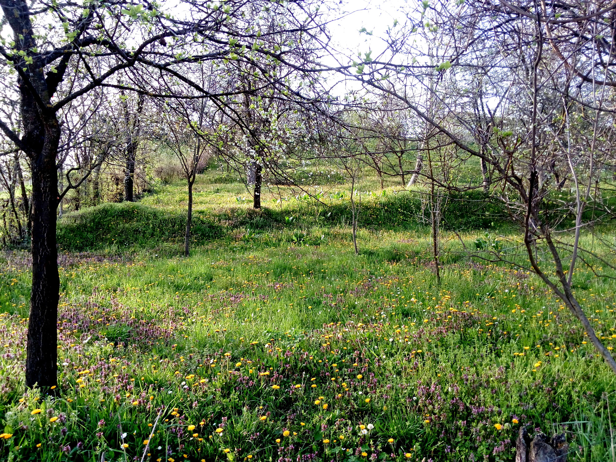 An Orchard in Vrdnik