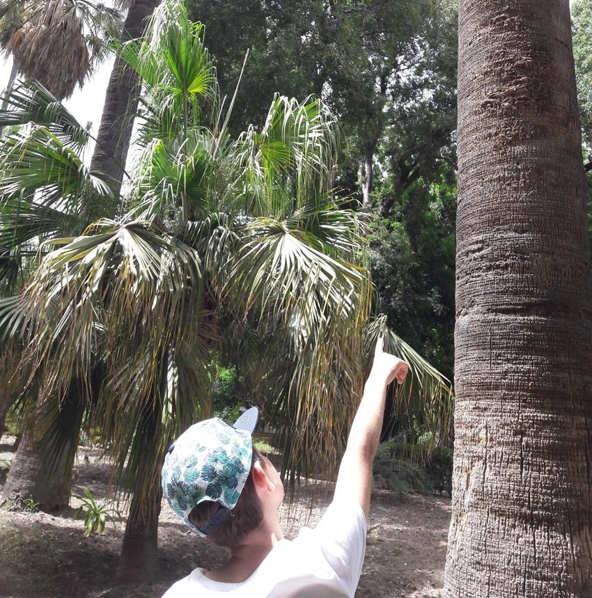 Alx Botanical Gdns.jpg