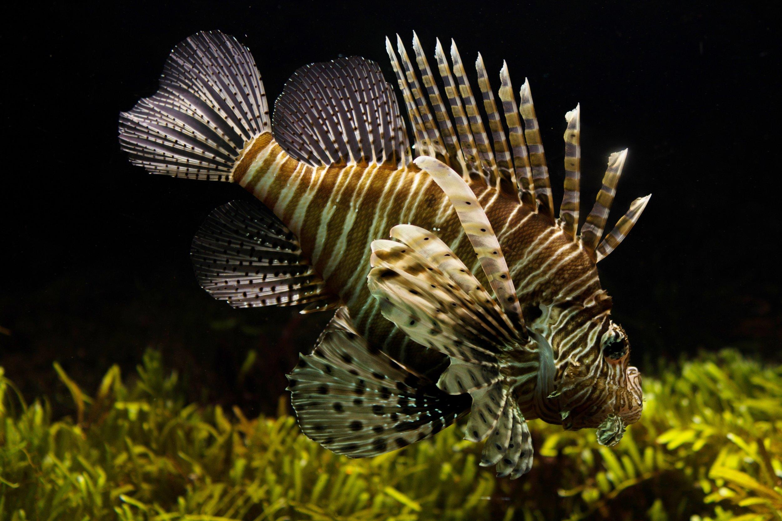 animal-fish-fishtank-9339.jpg
