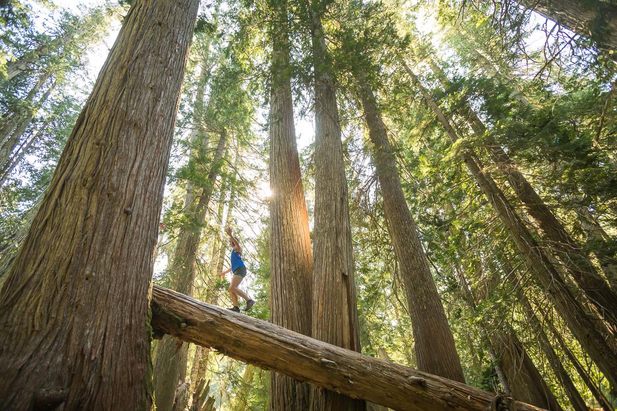 giant-cedars-whistler-JJ073403-web.jpg
