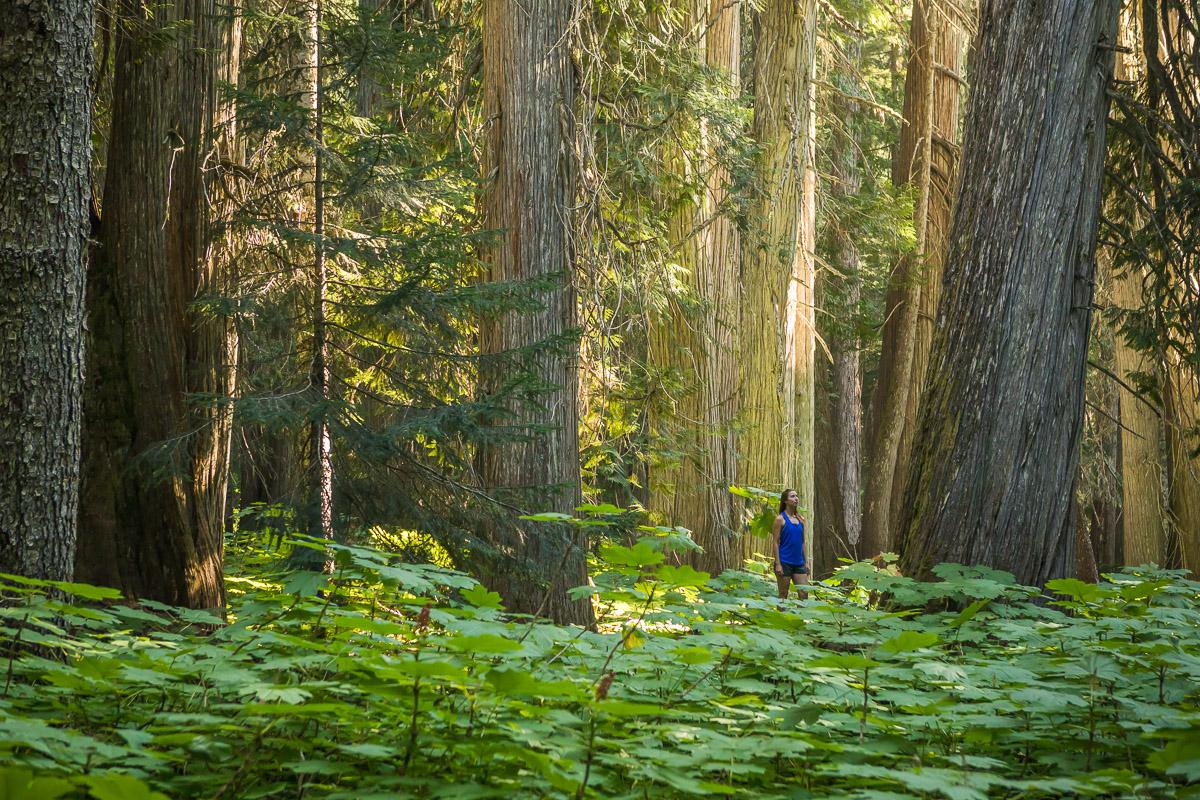giant-cedars-whistler-JJ073445-web.jpg