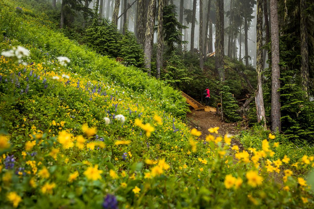 accent-trails-whistler-JJ062383-web.jpg