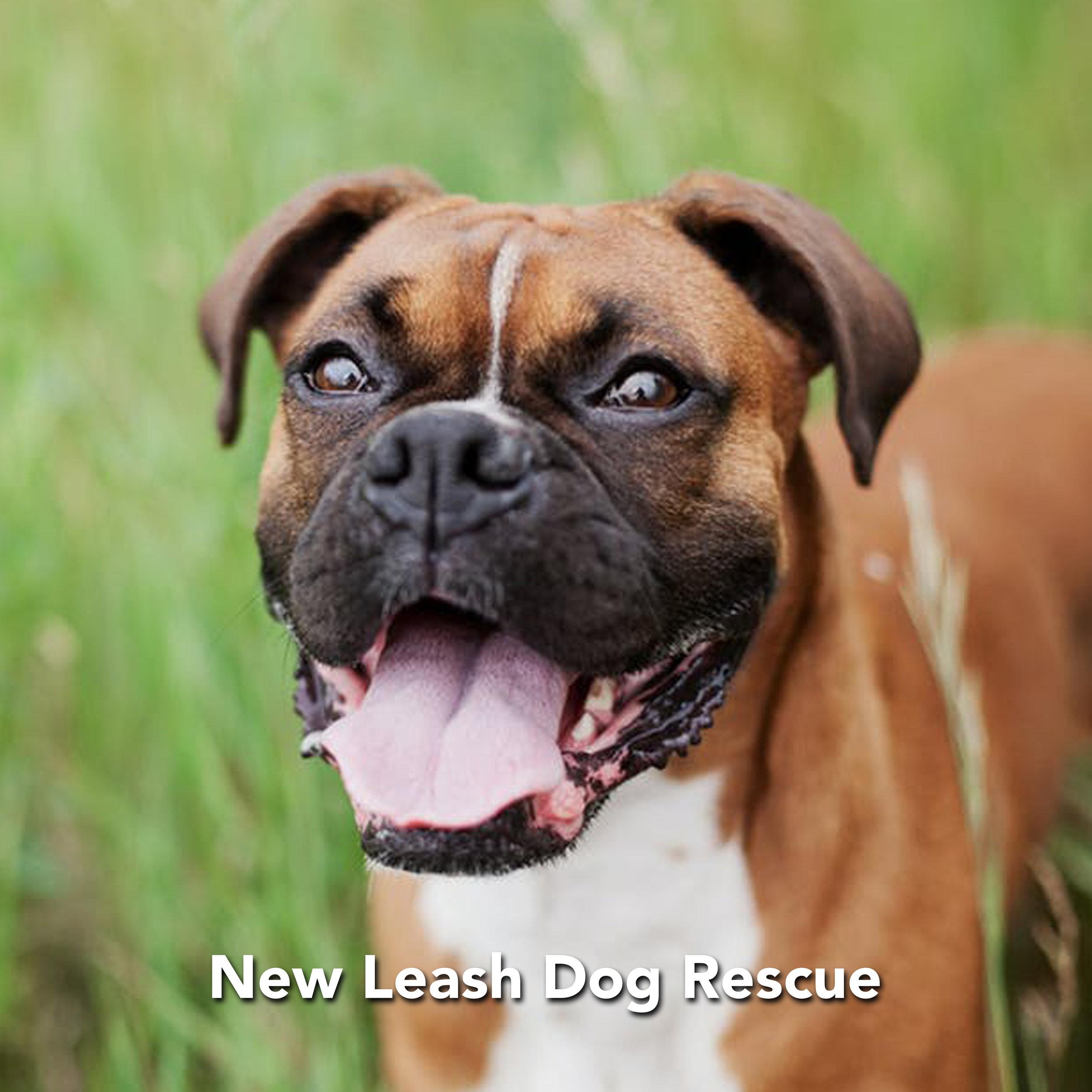 NEW LEASH DOG RESCUE