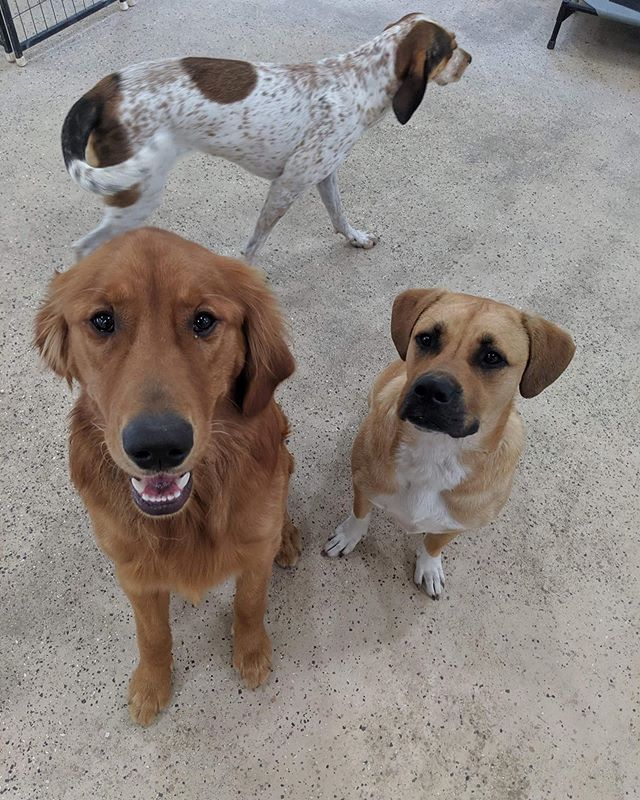Come play with us at our daycare in Sparta 🐾🐶 Now open 5 days a week ... Monday-Friday 6-6!