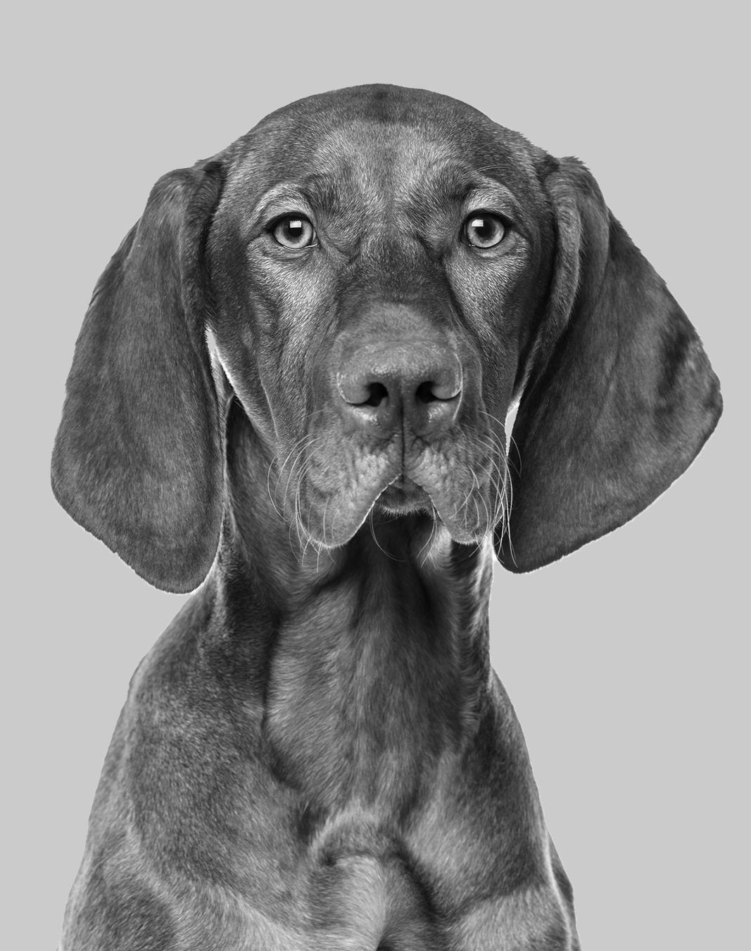 OKC dog grooming  dog salon okc  dog grooming education  school for dog grooming  training for dog grooming  grooming school  oklahoma dog grooming  oklahoma grooming school  dog grooming  oklahoma city dog salon  oklahoma city dog groomer  dog groomer okc  dog grooming school