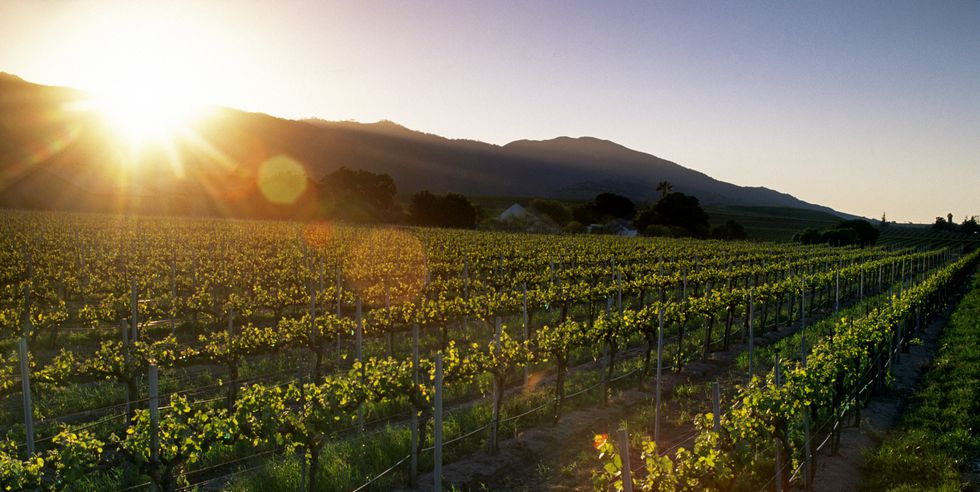 The Best Winery In Every State