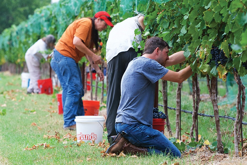 SHOULD TEXAS WINE BE MADE WITH 100 PERCENT TEXAS-GROWN FRUIT?