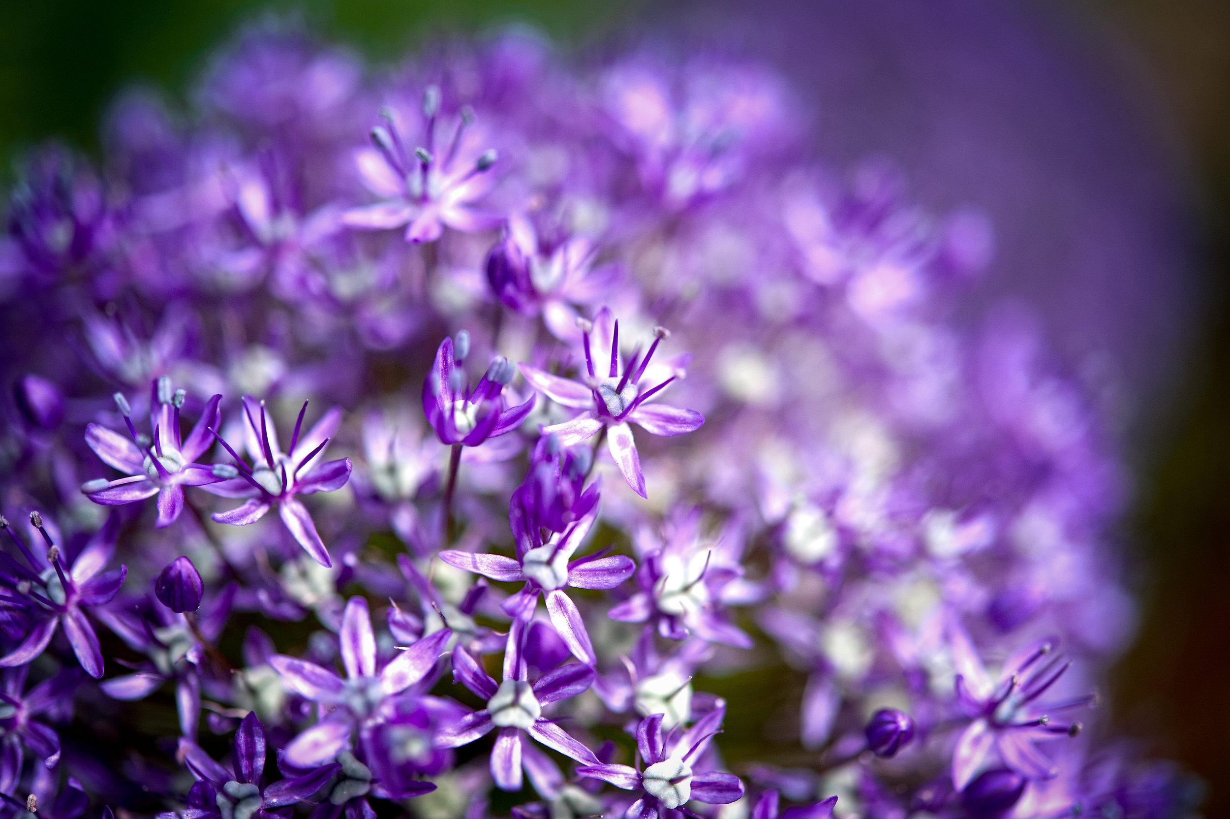 flower (1 of 1)-8.jpg