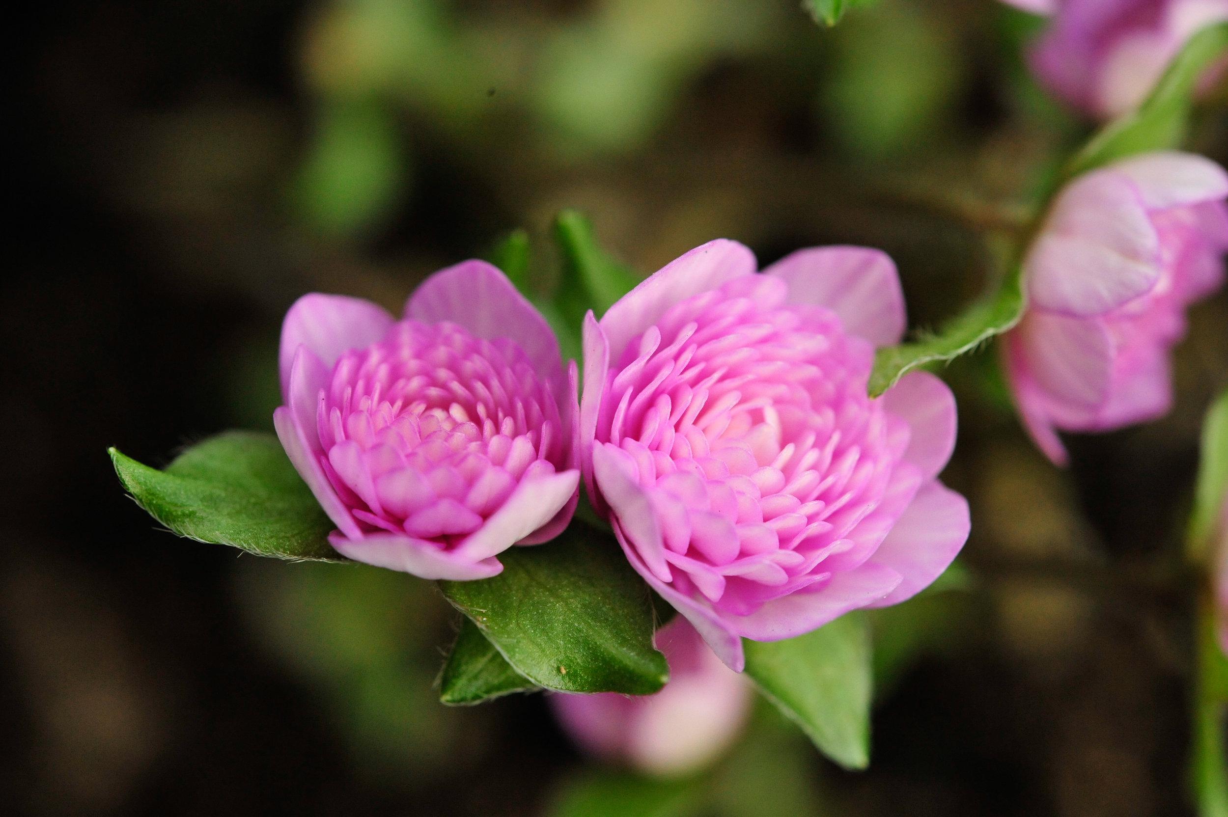 flower (1 of 1)-66.jpg
