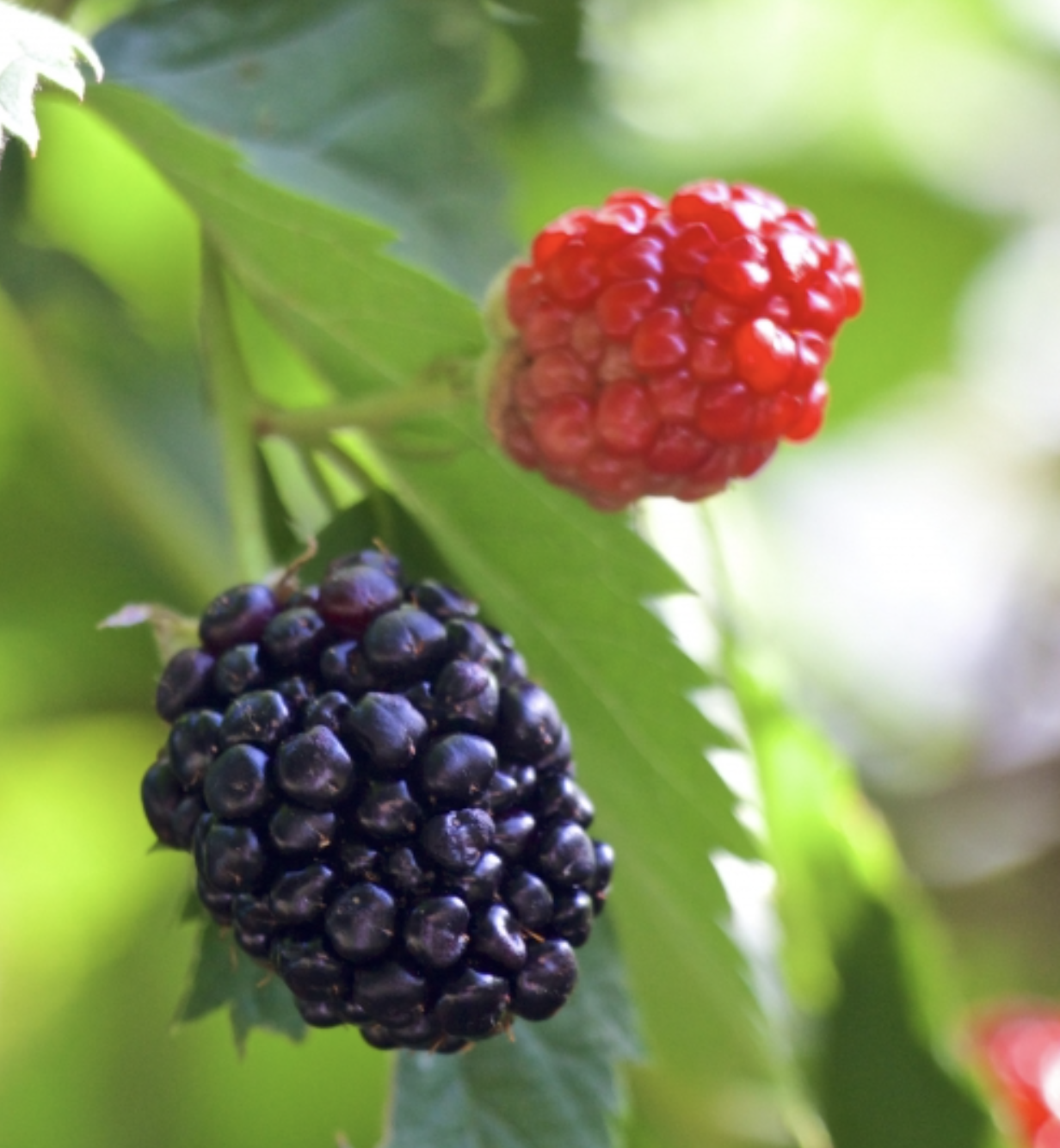 Learn to can jam - Have you ever been curious about canning? Making fruit or berry jam is the perfect place to start. Come to REC Retreats and participate in a hands-on