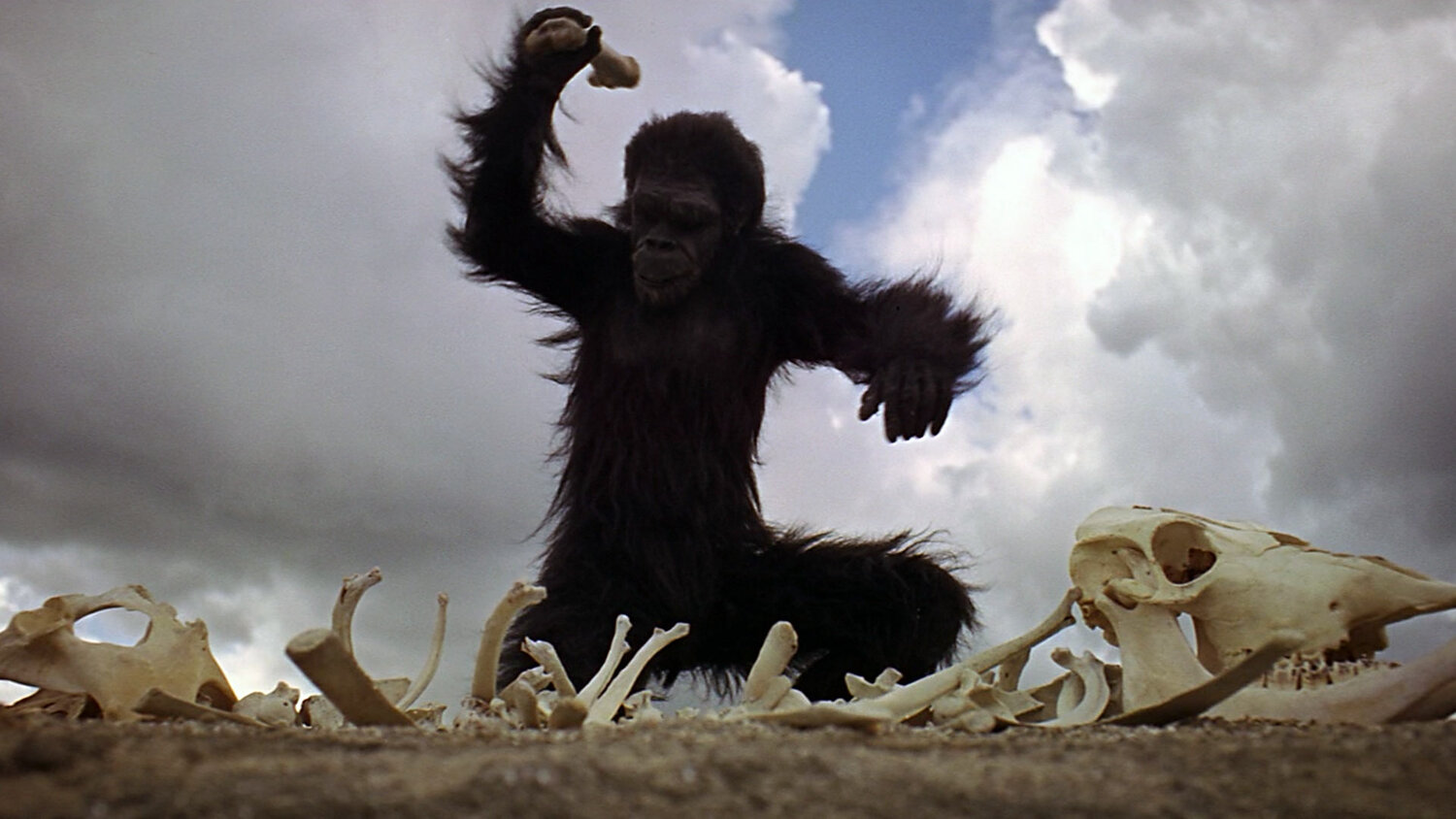 2001-A-Space-Odyssey-The-hominid-grabs-a-large-bone-and-begins-pounding-the-ground-and-other-bones-around-him.jpg
