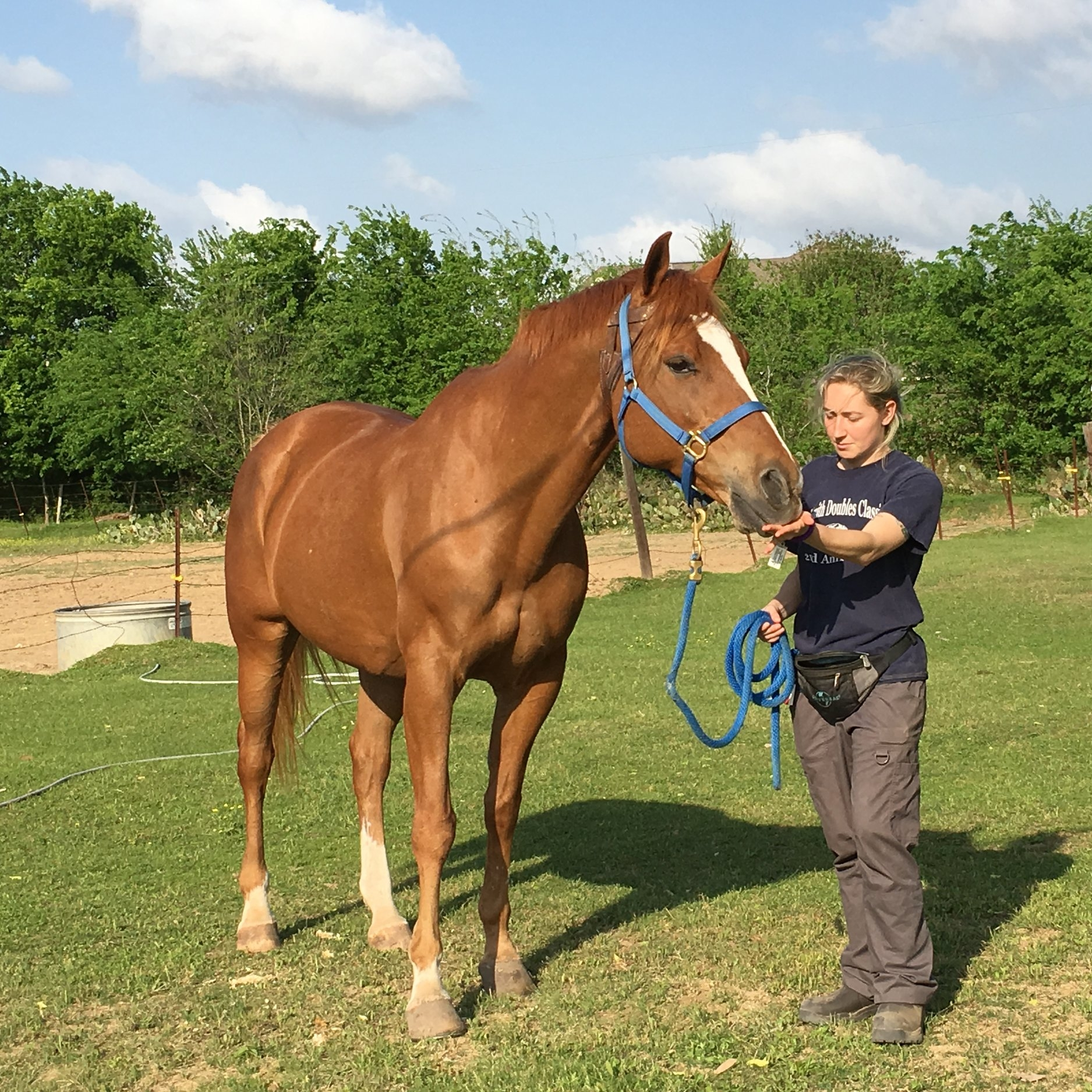 Externship and preceptorship for veterinary students in Texas.