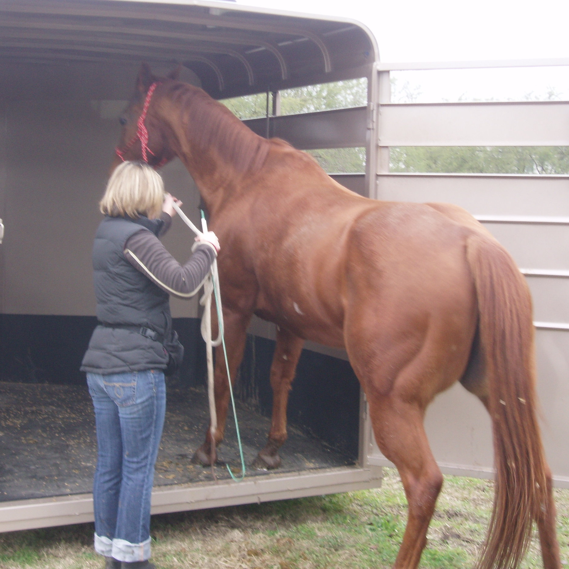 Bessie-horse behavior, horse body language, positive reinforcement, clicker training, crop hitting, lame horse, equine behavior problem.