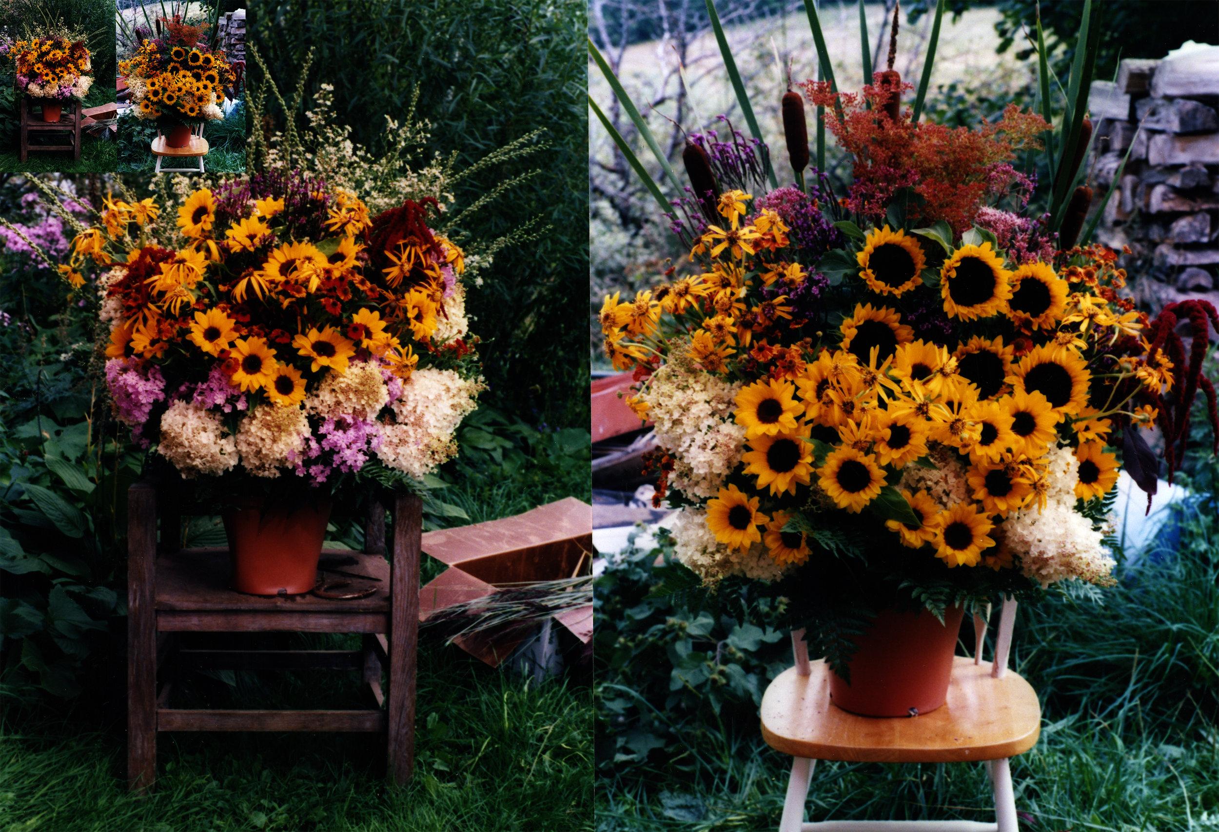 sunflowers before.jpg