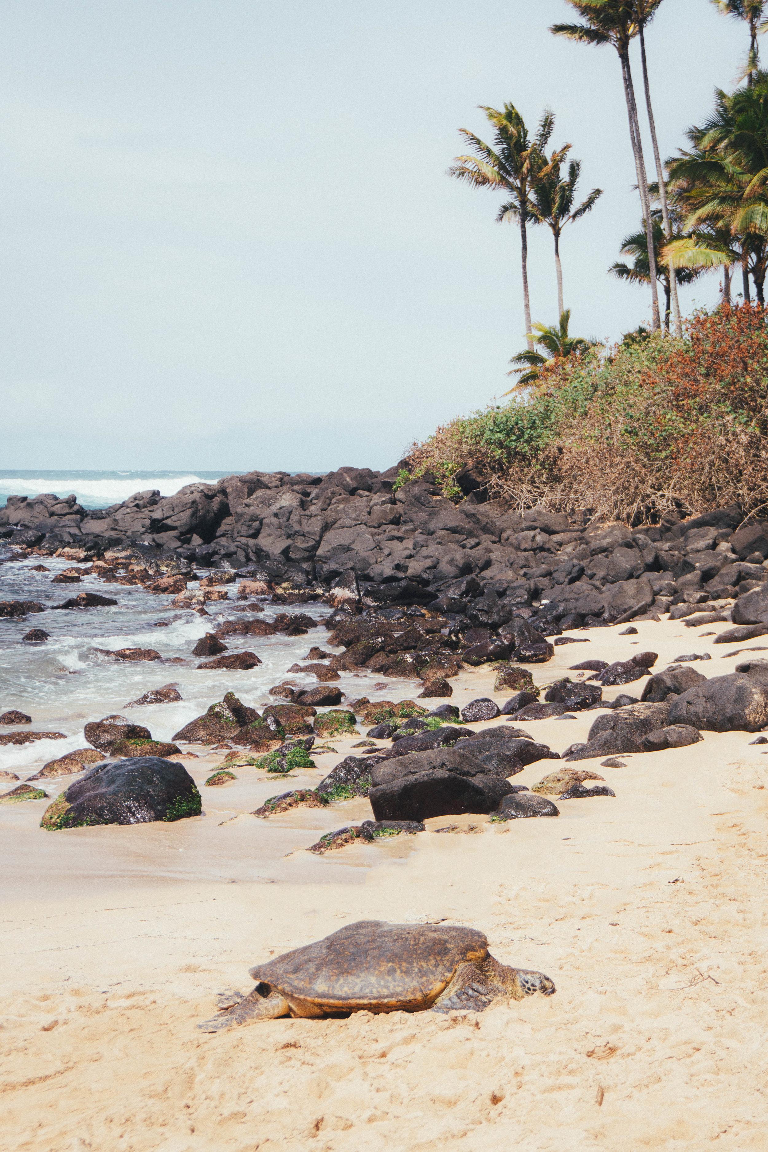 Erica_Luo_Best_Travel_Blogger_Oahu_Hawaii--5.jpg
