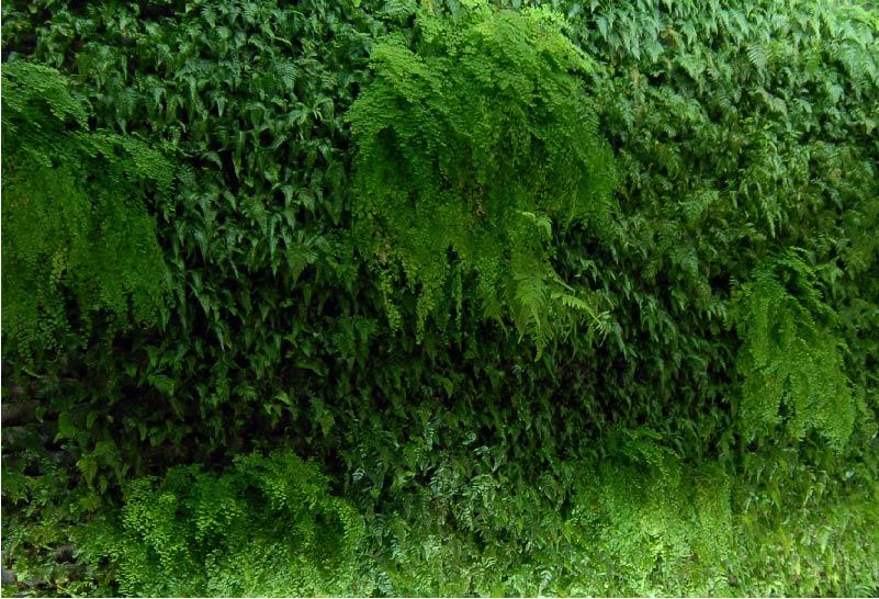 Green Walls -