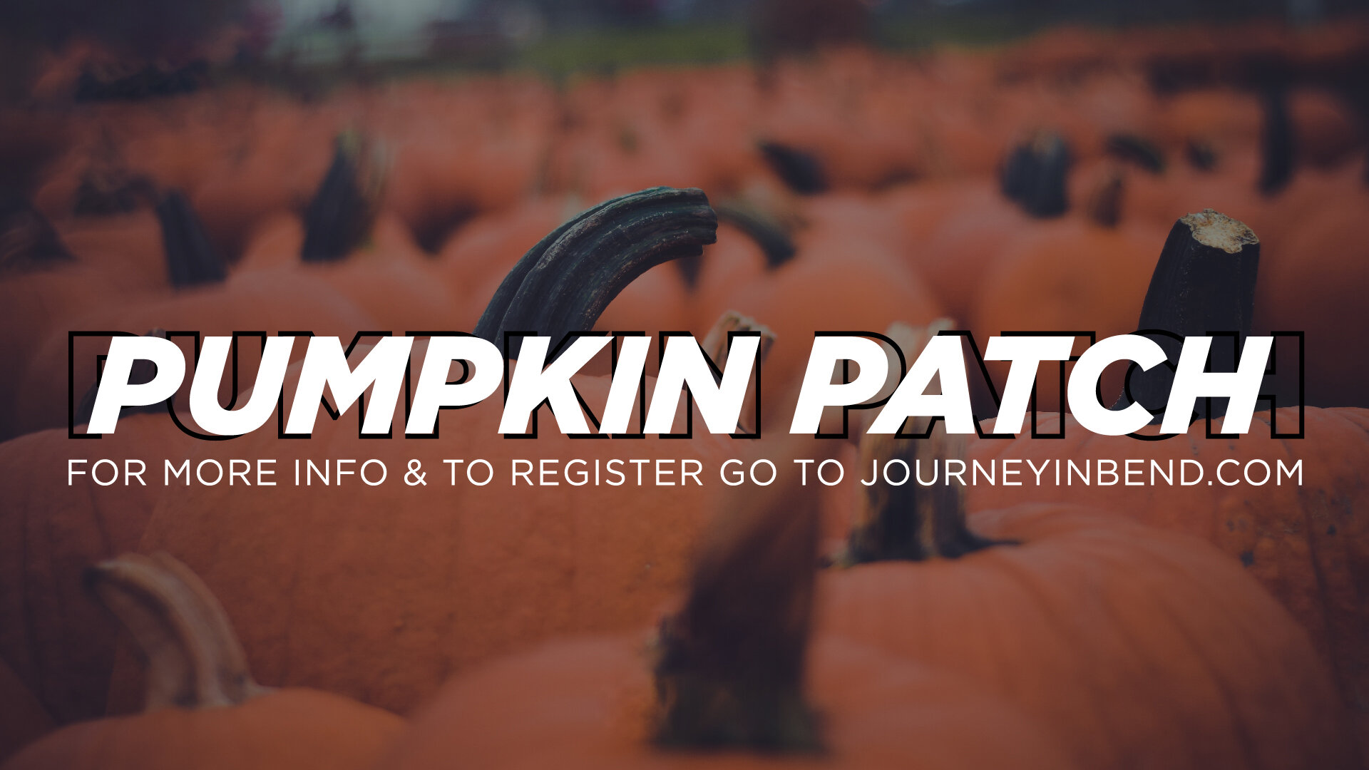 PUMPKIN-PATCH-HS-01.jpg