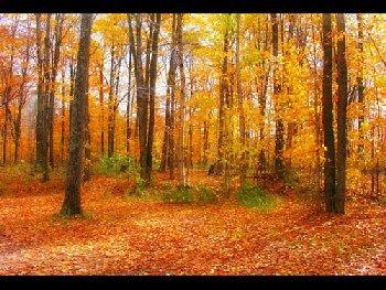 ramos_fall6.jpg