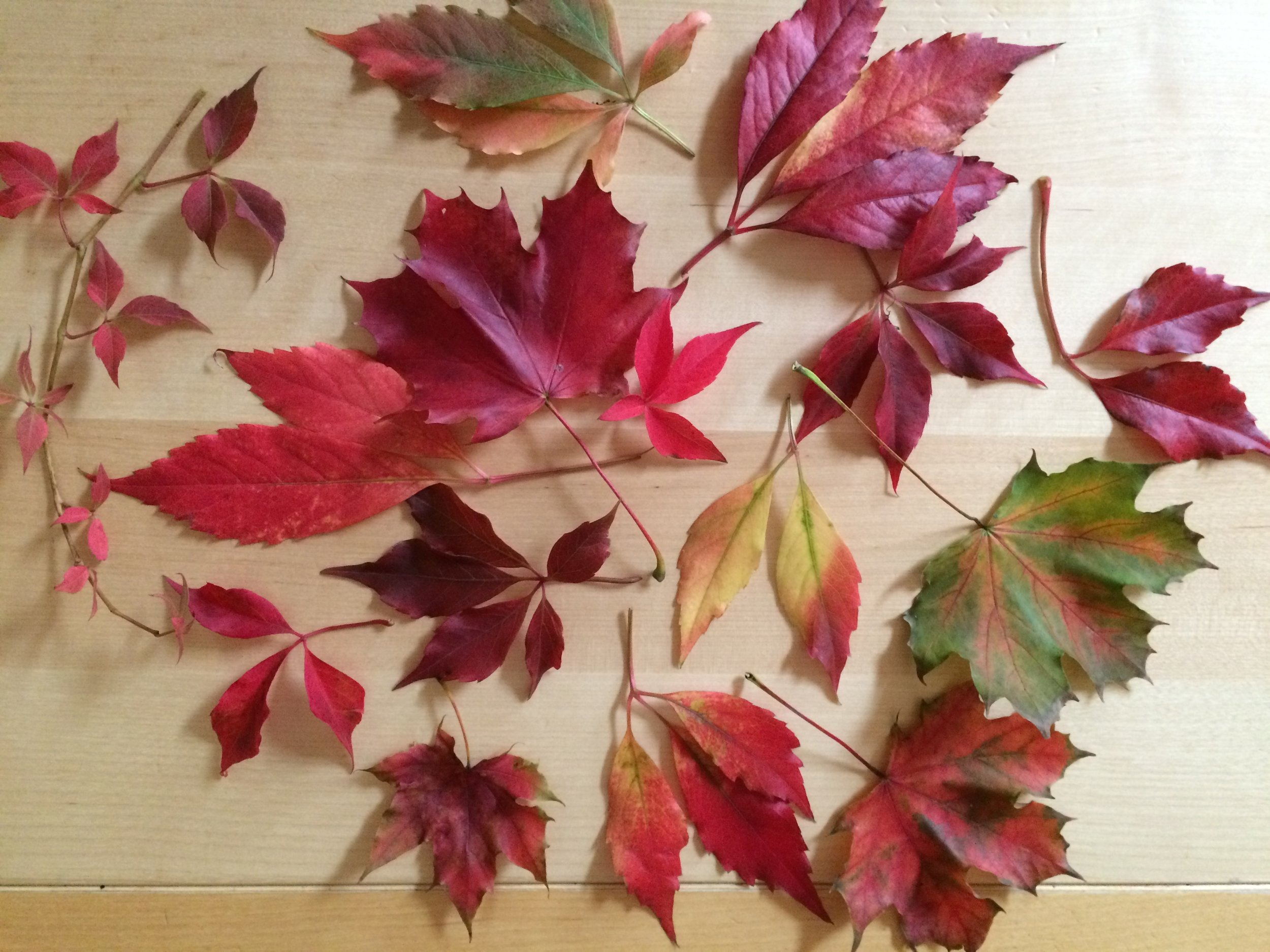 waxing autumn leaves