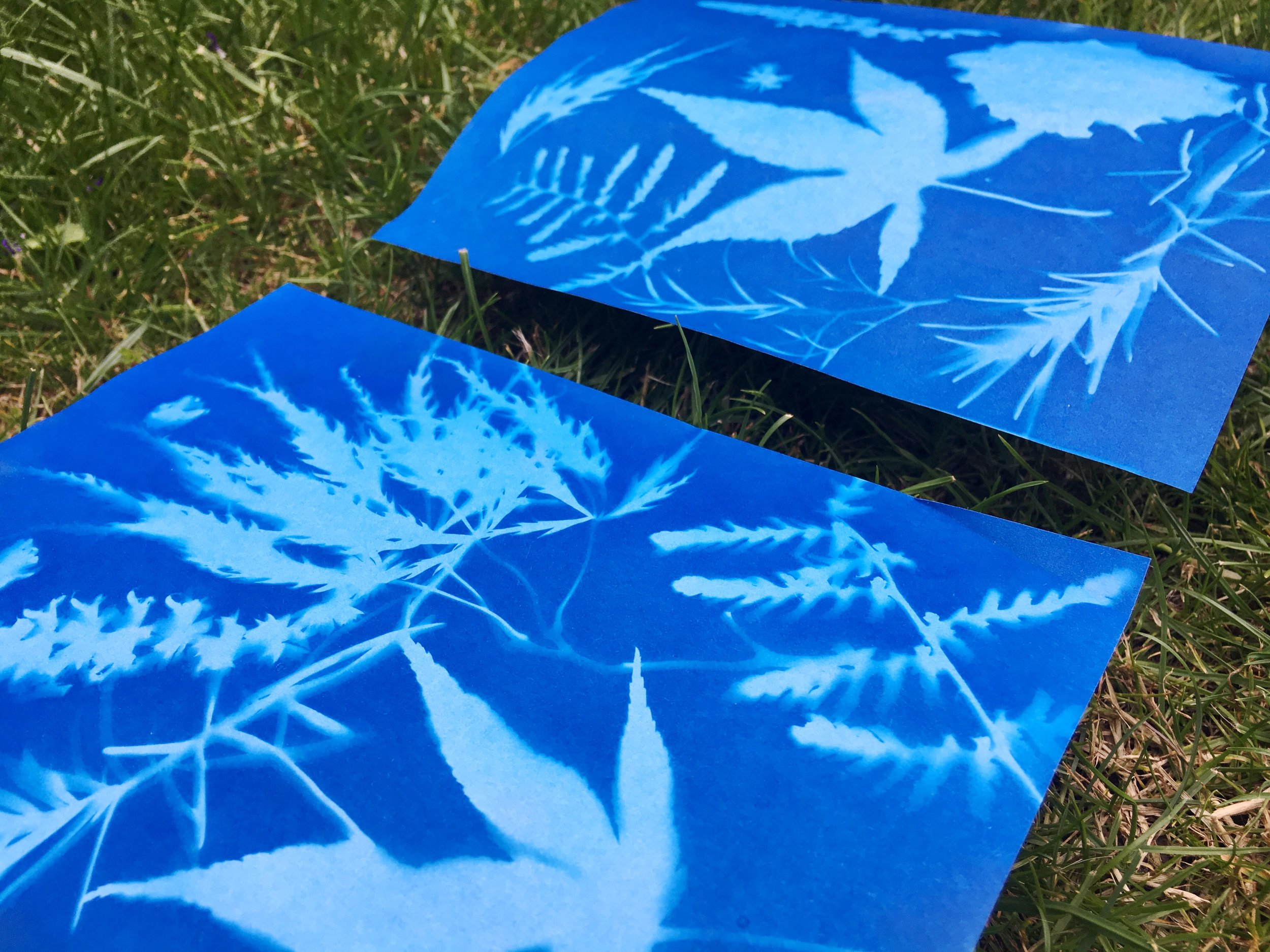 Make nature sun prints with children
