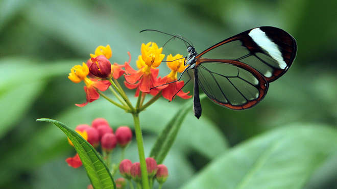 glasswing therapy ndis