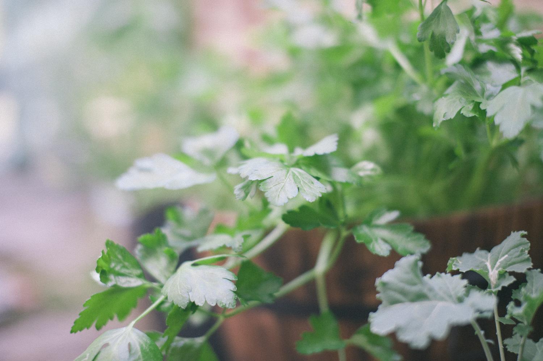 A Zero Waste Life- Gardening