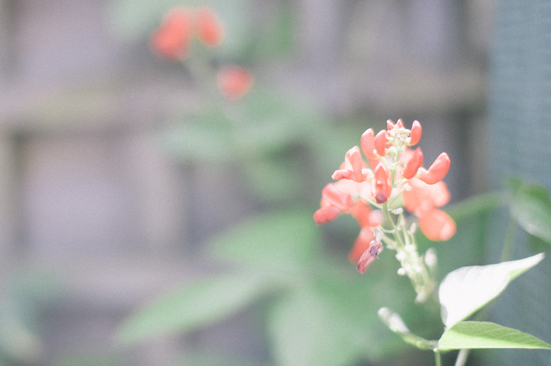 170802-annarachelphotography-lowres-0624.jpg