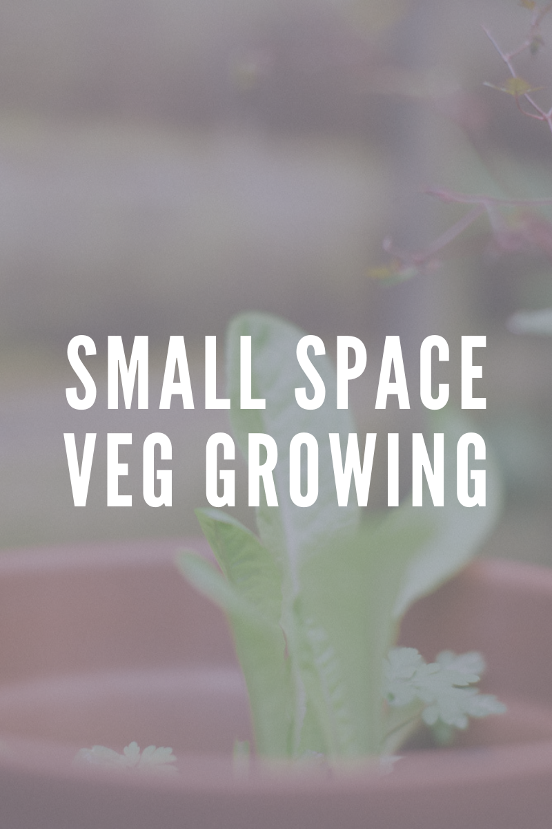 Zero Food Waste- Growing Veg in a small space