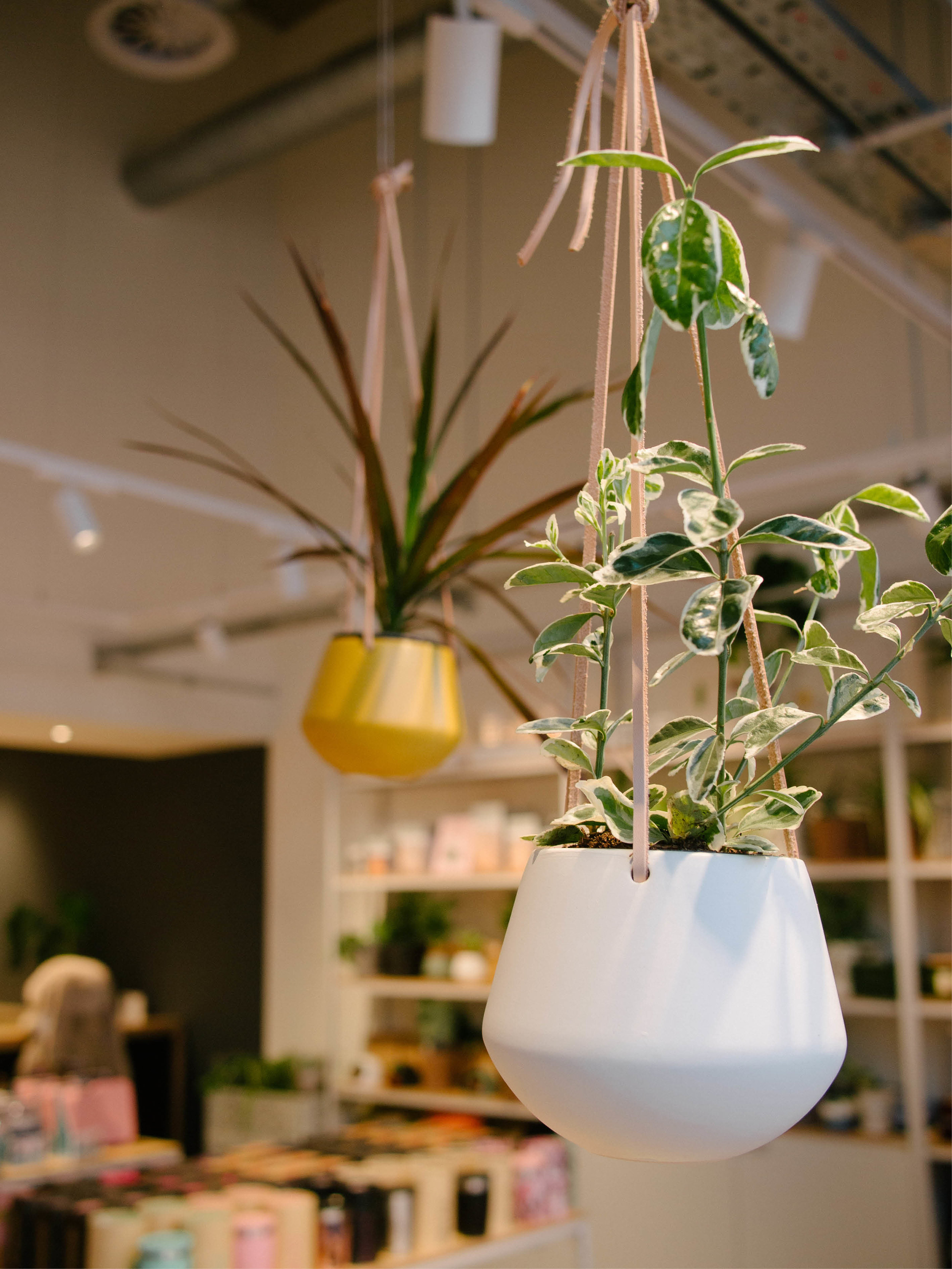 green sustainable interior living wall retail design utility manchester store design graphics agency