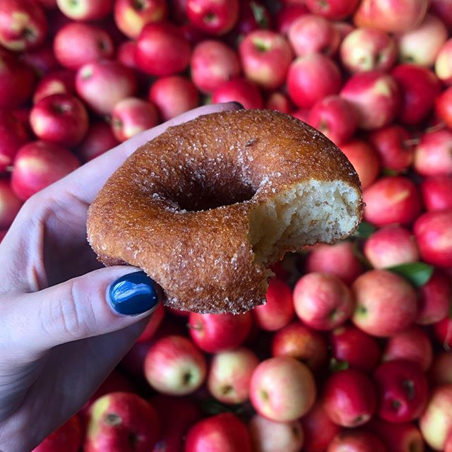 An 🍎 🍩 a day keeps the doctor away. #donutsformiles #appleciderdonuts #solesburyorchard