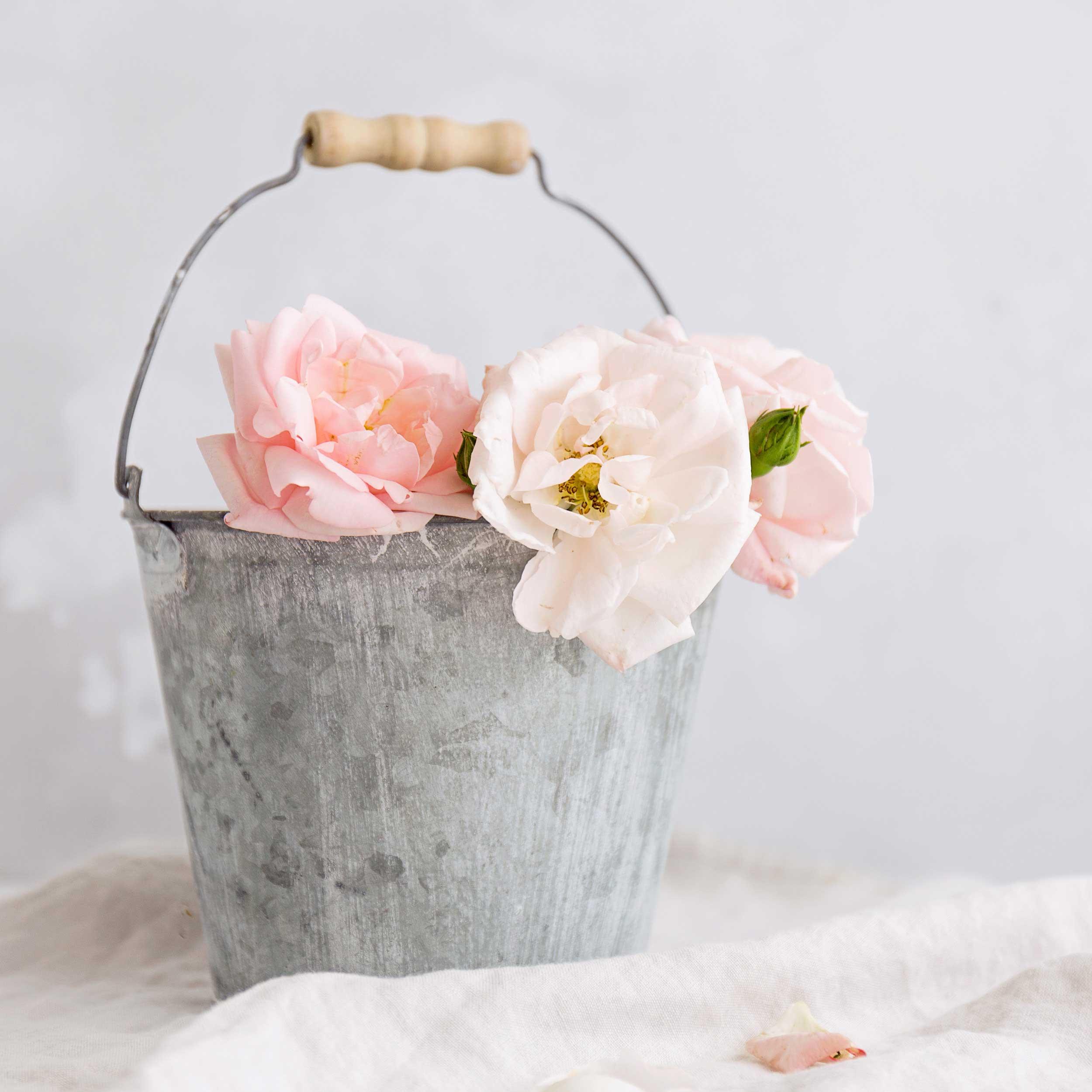 Rosesinatinbucket.jpg