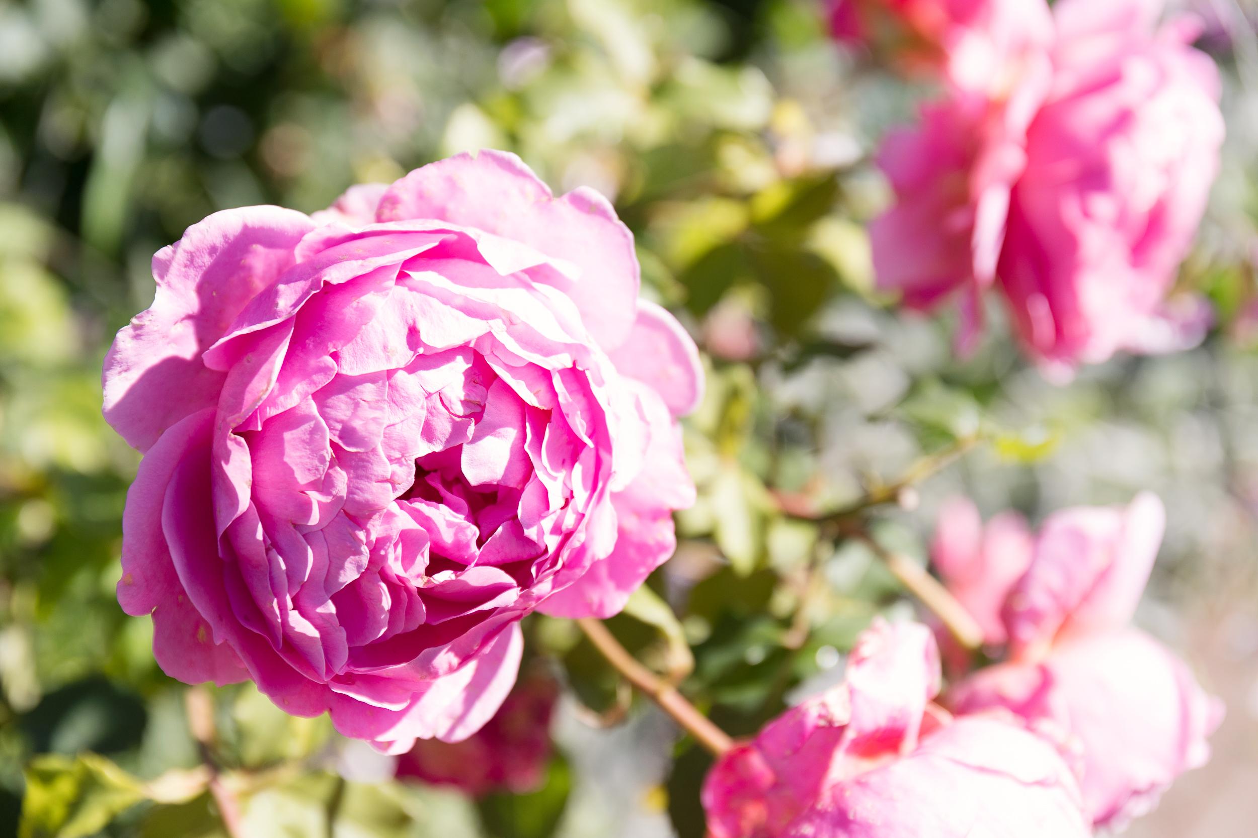 RHSRosemoor_LouiseHowell--23.jpg